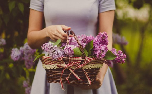 ร้านดอกไม้ ที่อยู่ใกล้สุขุมวิท Honeydew Florist